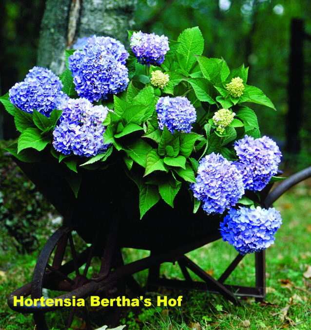 jan van noordenburg author at hortensia bertha 39 s hof. Black Bedroom Furniture Sets. Home Design Ideas