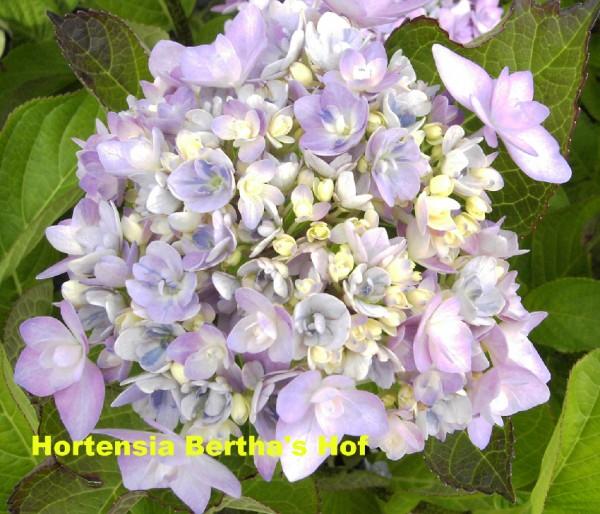 JomariVioletB2009mooiMetNaam